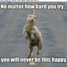 "* * SHEEP: "" Weez know how to love life ! """