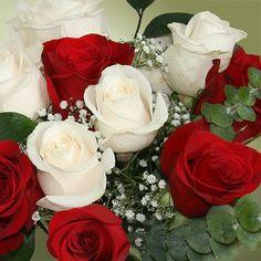 rosas blancas y rojas - Buscar con Google