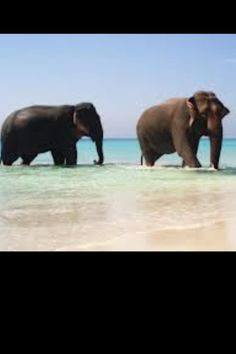 Loved seeing elephants on the beach in Africa! Such a spectacular site!!