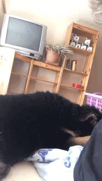 Did i hear treat?Follow our funny pets Tumblr.   Funny Cat GIFs