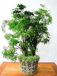 Árvore-da-felicidade-para-decoração