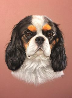 Pastel Drawing, Cat Drawing, Painting & Drawing, Dog Drawings, Color Pencil Art, Dog Paintings, King Charles Spaniel, Dog Art, Pet Portraits