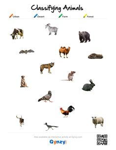 Teaching with help of the interactive whiteboard in a simple and effective way Classifying Animals, Science Worksheets, Keys, Pdf, Urban, Vertebrates And Invertebrates, Animal Classification, Unique Key, Key