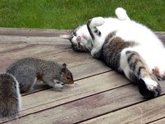 Funny Cats rule! #funnycat #funnycats #cats more funny cats here http://www.funnycatsblog.com