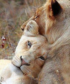 l love him ❤️ | photography by ©Carl Sagan #wildanimallifes