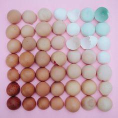 FÜR die Vögel Egg Shell Farbverlauf 10 x 10 Foto drucken