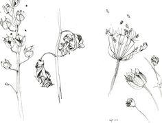dried plants / pen drawing