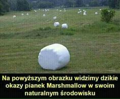 Read from the story Memy i memiątka ✔ by pedalsko (ʙᴇᴋꜱᴀ) with 759 reads. Love Memes, Best Memes, Dankest Memes, Stupid Funny Memes, Wtf Funny, Hilarious, Funny Photos, Funny Images, Polish Memes