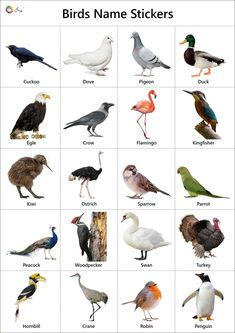 Fun Worksheets For Kids, English Activities For Kids, Flashcards For Kids, Kids Learning Activities, Preschool Charts, Zoo Preschool, Bird Pictures, Animal Pictures, Animals Name With Picture