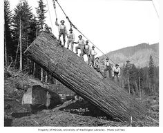 https://www.facebook.com/photo.php?fbid=10203567222053632 Don RoweOld Logging Pictures Mineral Washington, circa 1935