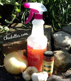 Natural homemade garden bug and pest repellent - even deters squirrels and rabbits!