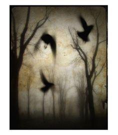 crows, dreamscape
