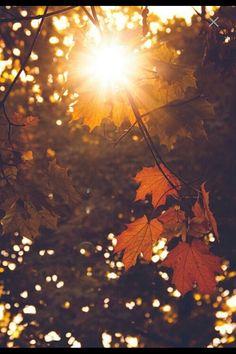 Autumn serenity :)