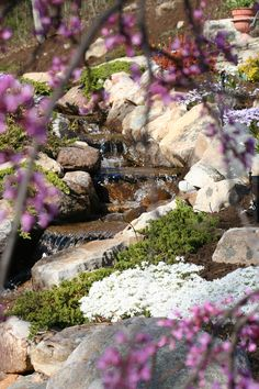 Waterfall through a Weeping Redbud