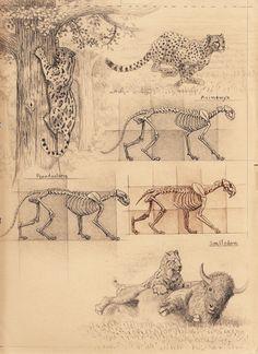 Sabertooth diaries 1: excavating old sketches | chasing sabretooths