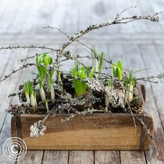 spring flowers_winterly_decorated_in_brickform_aus_holz … – Flower İdeas Garden Planters, Indoor Garden, Indoor Plants, Deco Floral, Arte Floral, Easy Garden, Flower Boxes, Spring Garden, Garden Planning