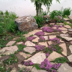 Flagstone patio with flowering thyme- again, looks messy