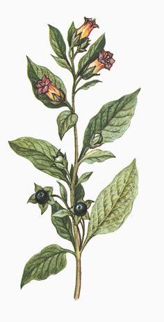 drawings of belladonna pornstar