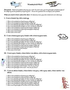 Monohybrid Cross Worksheet | Genetics, Worksheets and School