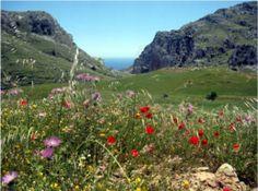 Den Frühling wandernd auf Kreta erleben mit Willy Dorn