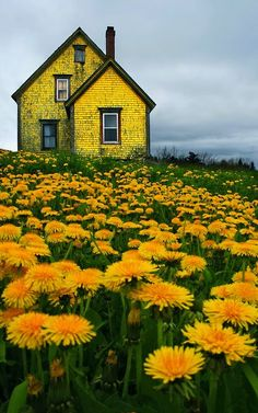 Abandoned Yellow House in Nova Scotia. Photo by Matt Madden & Kim Vallis. : AbandonedPorn Abandoned Yellow House in Nova Scotia. Photo by Matt Madden & Kim Vallis. Beautiful World, Beautiful Places, Beautiful Pictures, Beautiful Flowers, Inspiring Pictures, Beautiful Beautiful, Exotic Flowers, Beautiful Gardens, Nova Scotia