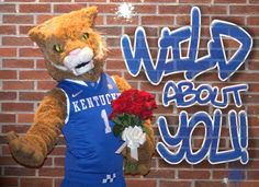 """""""Happy Valentine's Day to all my friends and fellow Wildcats fans! Uk Basketball, Kentucky Basketball, University Of Kentucky, Kentucky Wildcats, Abc School, School Stuff, Go Big Blue, My Old Kentucky Home, Happy Valentines Day"""