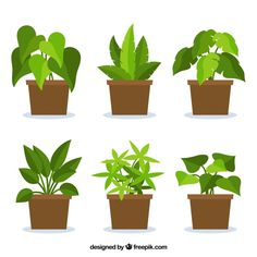 Collection of plants in flat design Free Vector