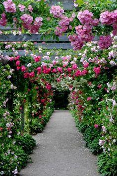 Arbor with climbing roses Diy Garden, Dream Garden, Garden Paths, Garden Landscaping, Garden Kids, Fruit Garden, Rose Arbor, Garden Arches, Climbing Roses
