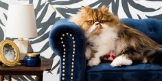 This Cat's Room Is More Stylish Than Most Chic Hotels  - ELLEDecor.com