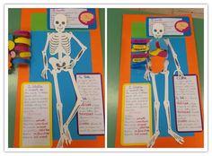 Scheletro realizzato con i bambini della classe 5°......studiamo il corpo umano.