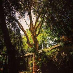 In the garden #garden #gardenersnotebook #nature #tree #landscape #plants