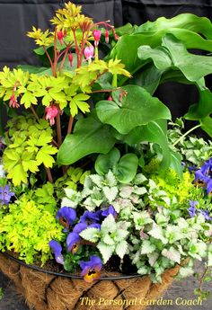 Planter/ interesting contrasts planted here Planters For Shade, Hanging Planters, Hanging Baskets, Container Plants, Container Gardening, Flower Containers, Outdoor Plants, Outdoor Gardens, Potted Plants