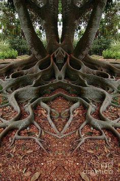 unusual trees | ल्् | Unique Tree