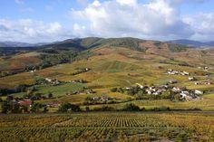 Weekend dans le Beaujolais : 8 expériences à ne pas louper ! - Chouette World - Blog voyage Le Beaujolais, Girls World, Blog Voyage, Nature, Mountains, Owl, Travel, Outdoor, Owls