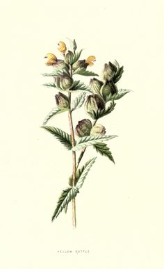 Veronica-Decor: Familiar wild flowers 3