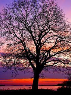 Oak Tree and gorgeous sunset