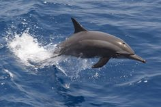 With the Dolphins ... !!! MSY San Marco-Sudan