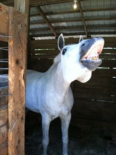 This reminds of my old horse Sylvester :)