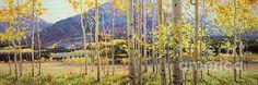 Panorama View Of Aspen Trees - Gary Kim