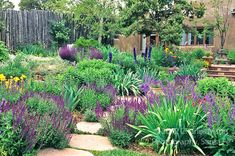 Landscape Architect and garden dseigner Catherine Clemens concieved and created this colorful and drought tolerant xeriscape garden and home...