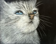 Cats, Drawings, Animaux, Gatos, Kitty Cats, Cat, Kitty, Cat Breeds