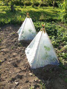 Mini greenhouses - Looks easy to do :)