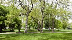 Green neighborhoods are known to provide us with several health benefits, but researchers have pinpointed yet another one: an improvement in birth outcomes.