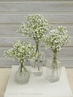 Gypsophila-Baby's Breath-Ingrid Henningsson-Of Spring and Summer