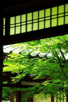 建仁寺 #緑 #Green #Kyoto