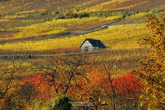 The house in the vineyards by Philippe Sainte-Laudy on 500px