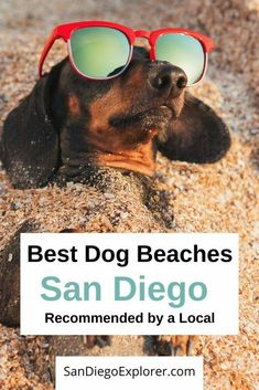 Recommendations for the best San Diego Dog Beaches so you can pick the best one for you and your pup.