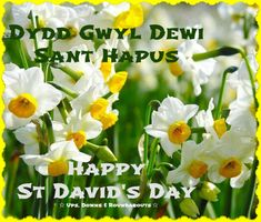 Happy St David's Day