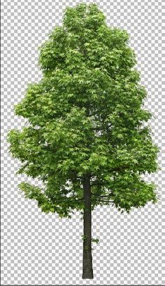 SMART HOUSE: Photoshop tree library (part - 60 big trees shade file standard background Architecture Concept Drawings, Architecture Graphics, Landscape Architecture, Tree Photoshop, Photoshop Brushes, Photoshop Rendering, Photoshop Design, Tree Silhouette, Silhouette Vector