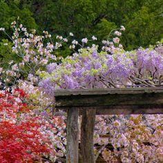 Brooklyn Botanic Gardens, NYC